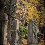 Morbides-Wien-Zentralfriedhof