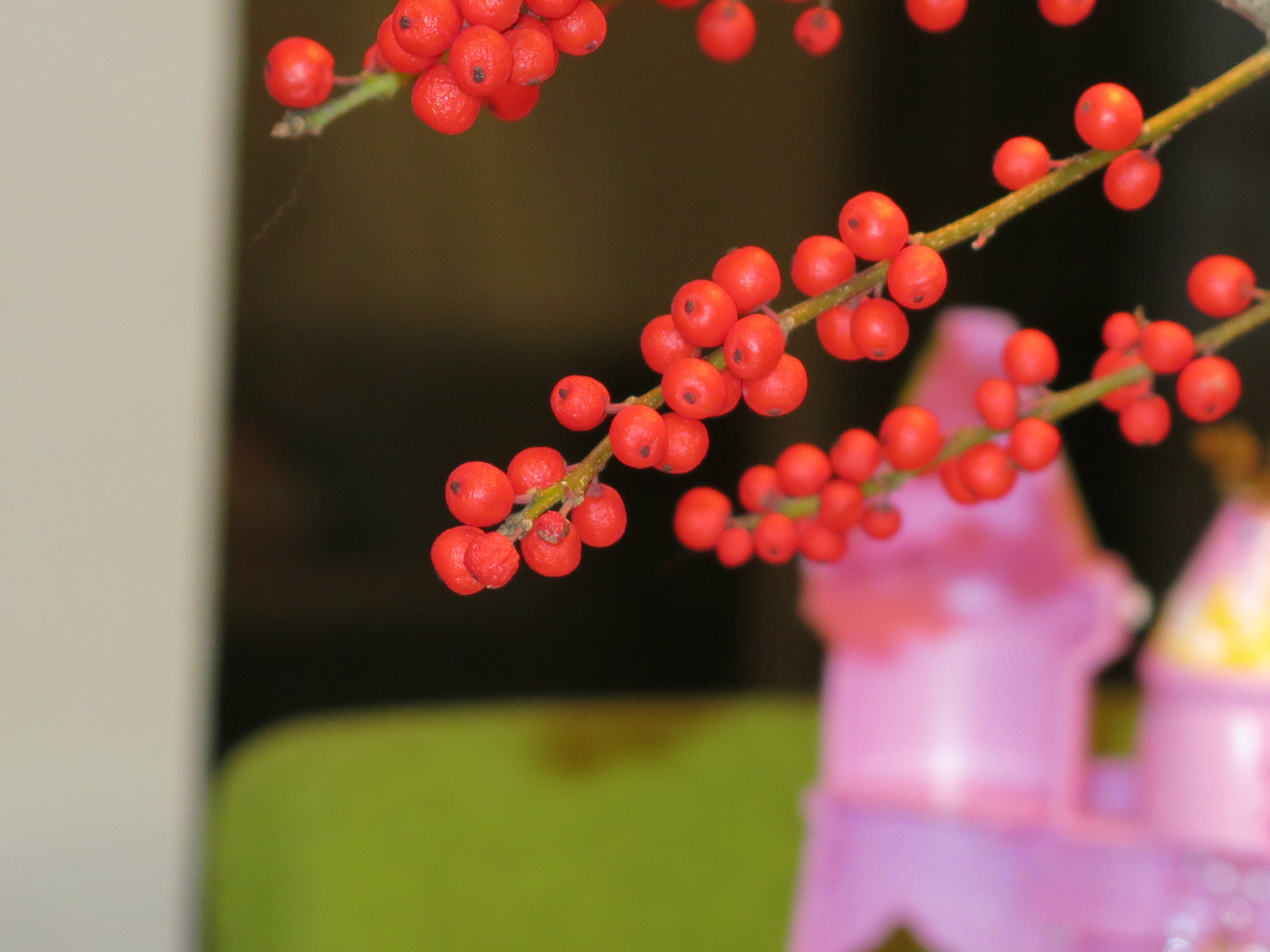 Erste Versuche in botanischer Fotografie