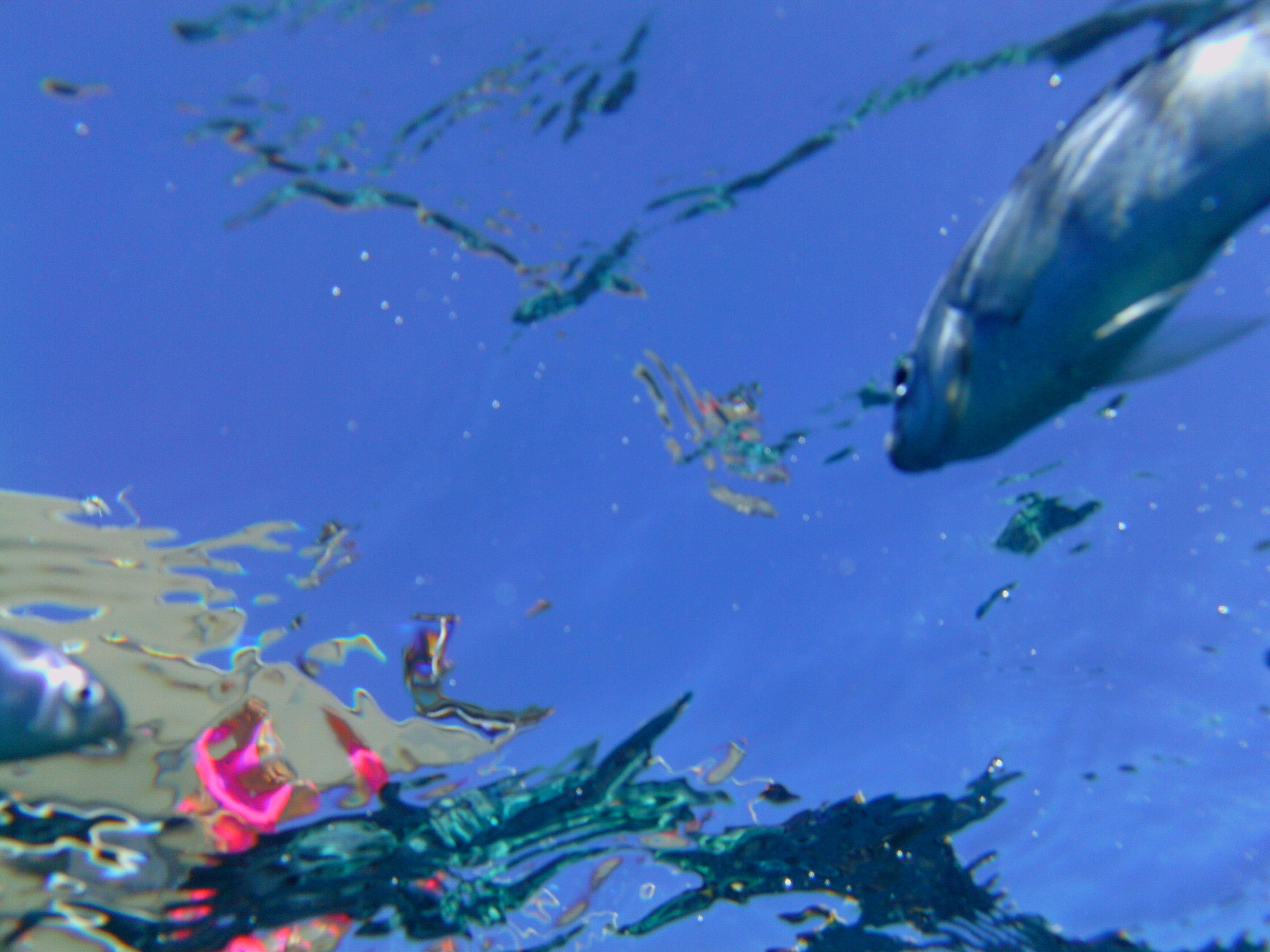 Fische füttern in Coral Bay