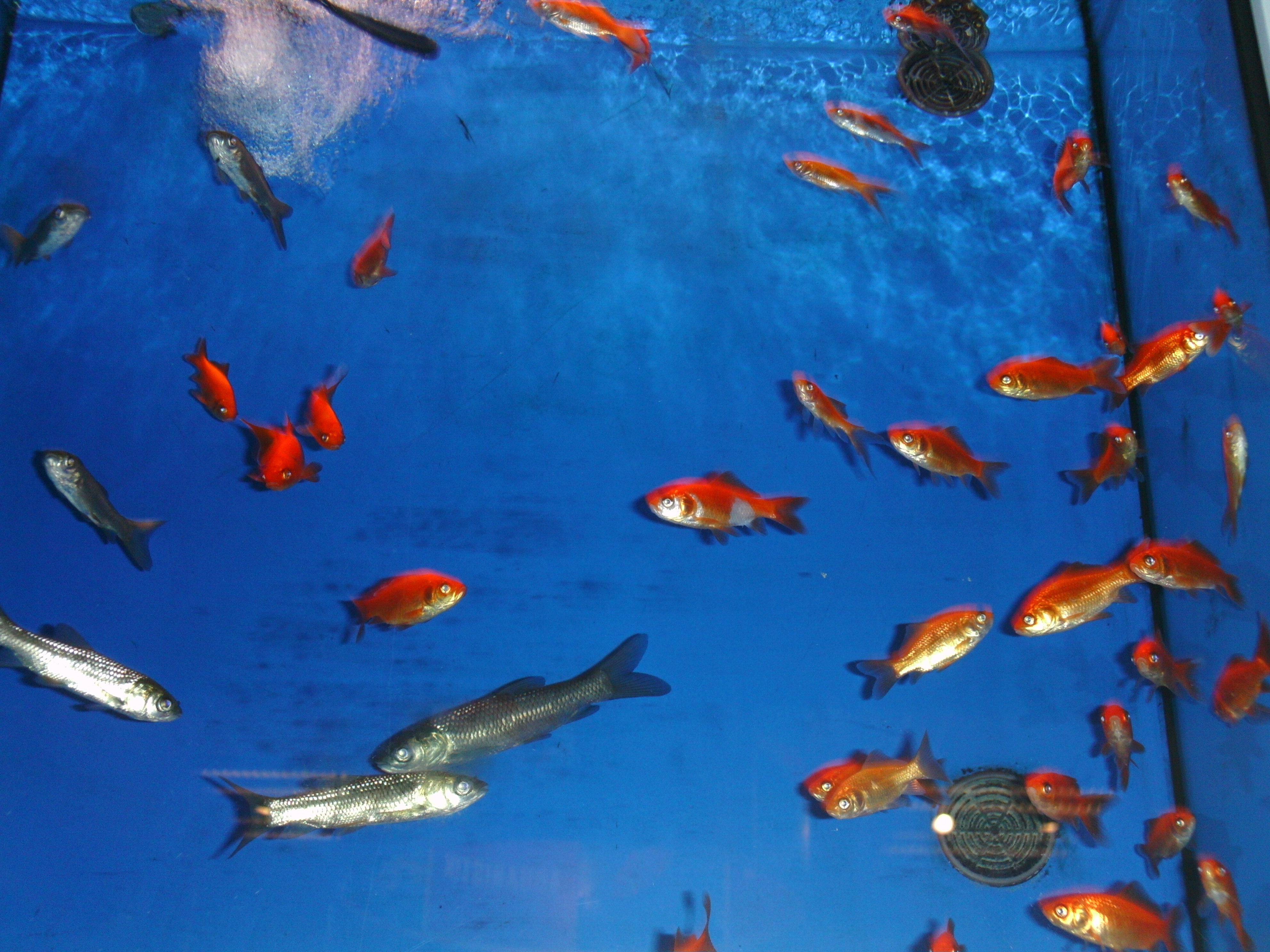 Unter Fischen