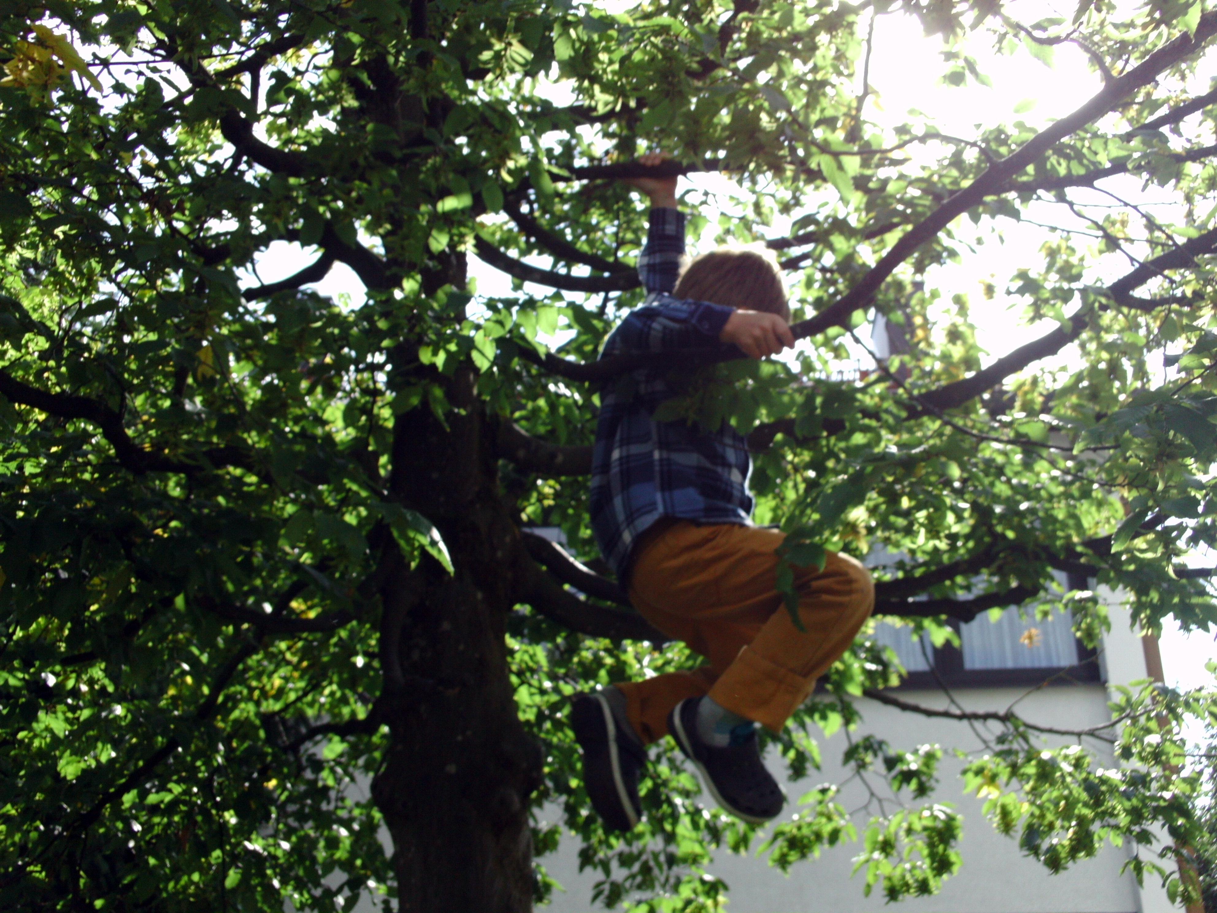 Nachbarsjunge im Baum