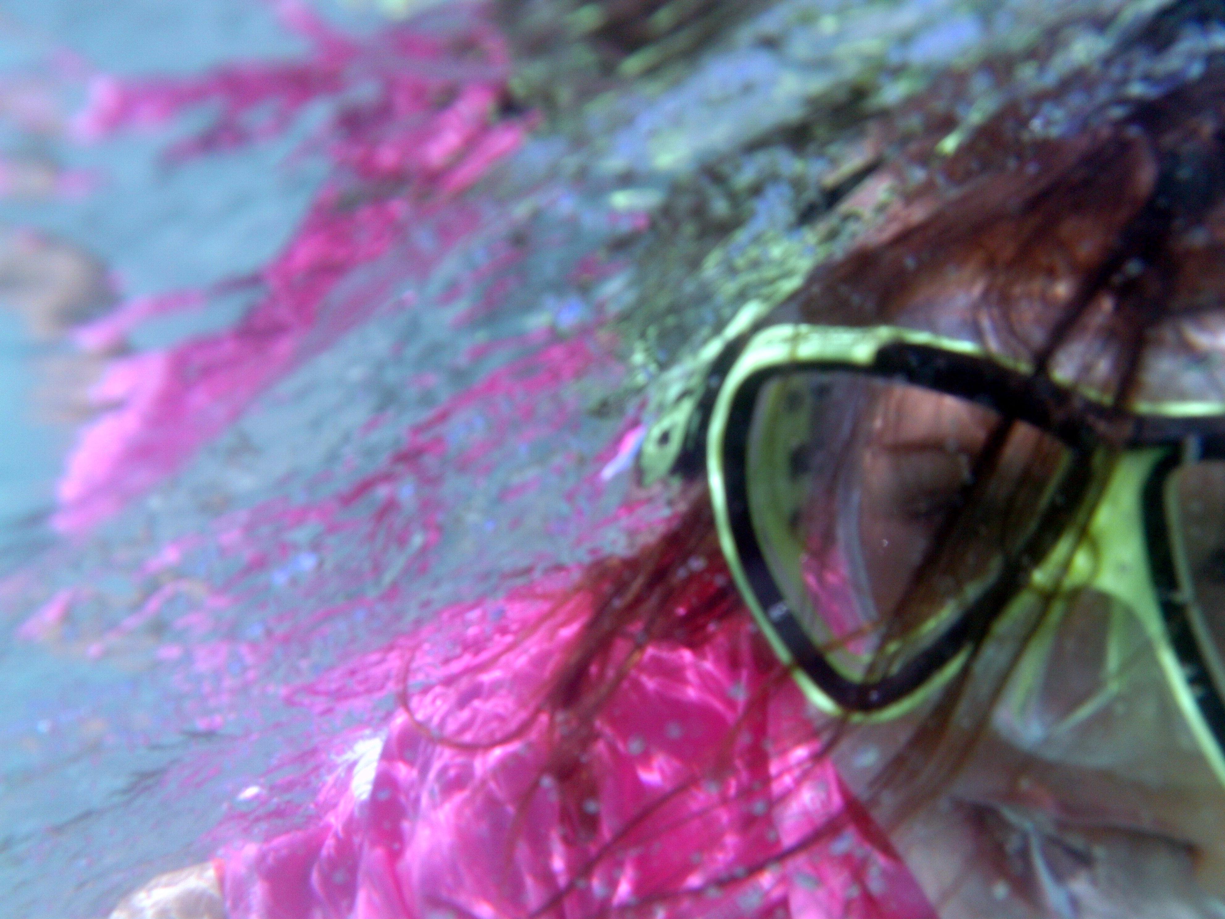 Selbstportrait Unterwasser