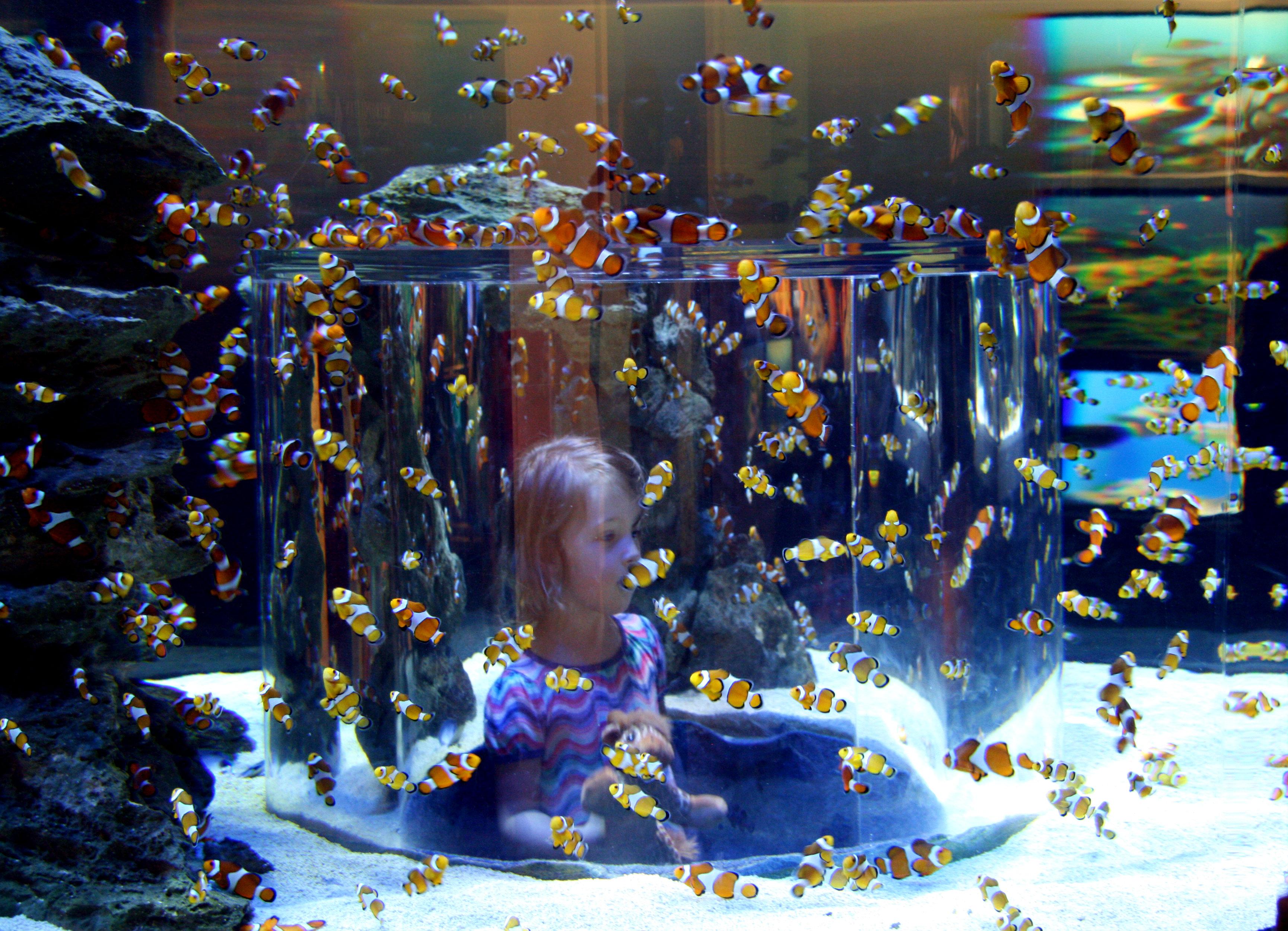 Kapstadt_Aquarium