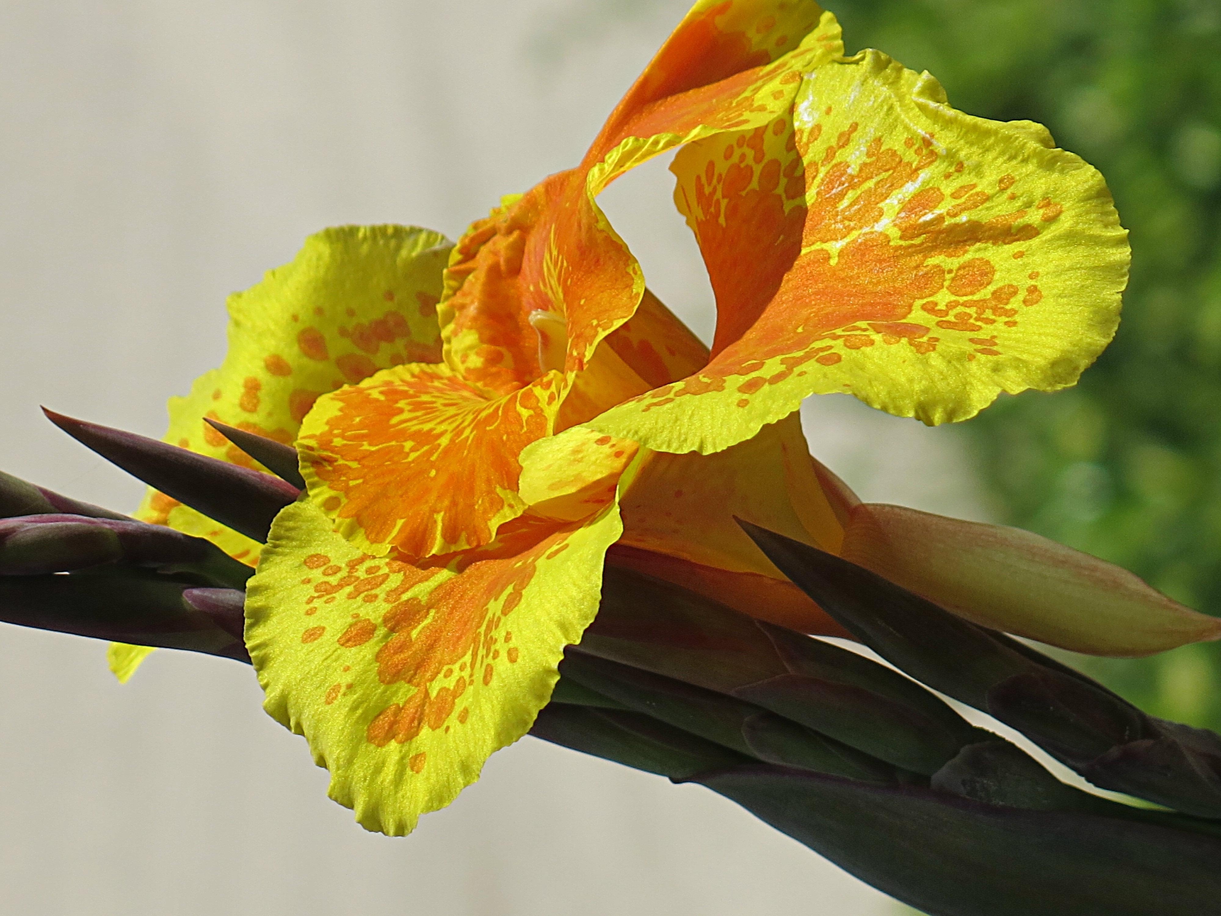 Australien-Flower-Bondi
