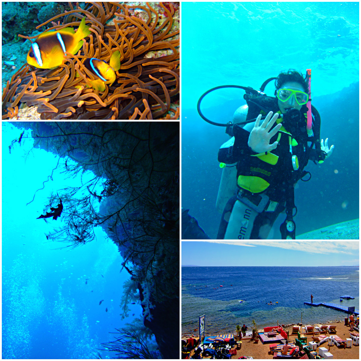 Dahab-Diving
