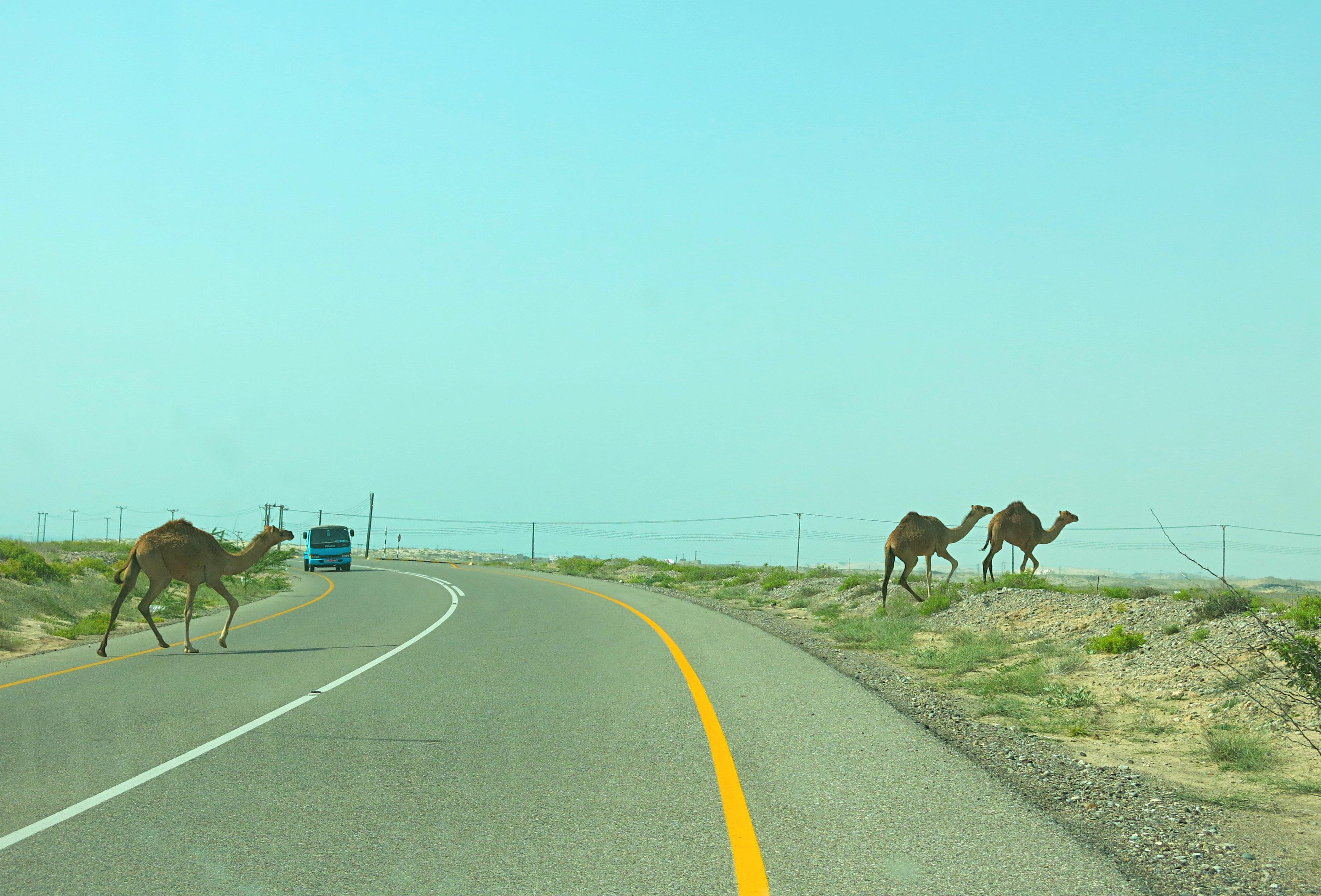 Oman Straßenvrkehr