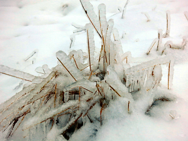 Frozen-Gras