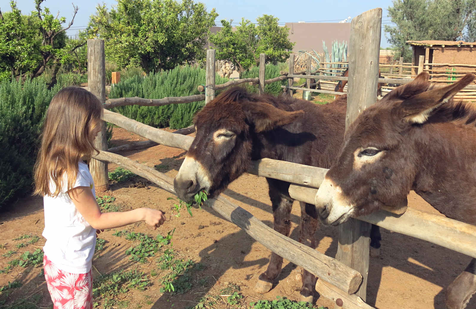 Fellah-Hotel-Marrakesch-Tiere