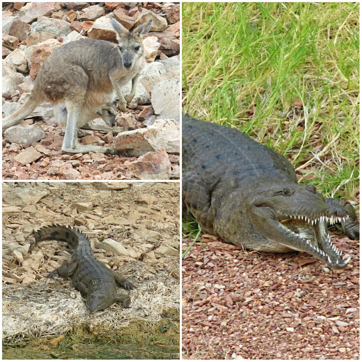 Australien-Westen-Lake-Argyle-Tierwelt