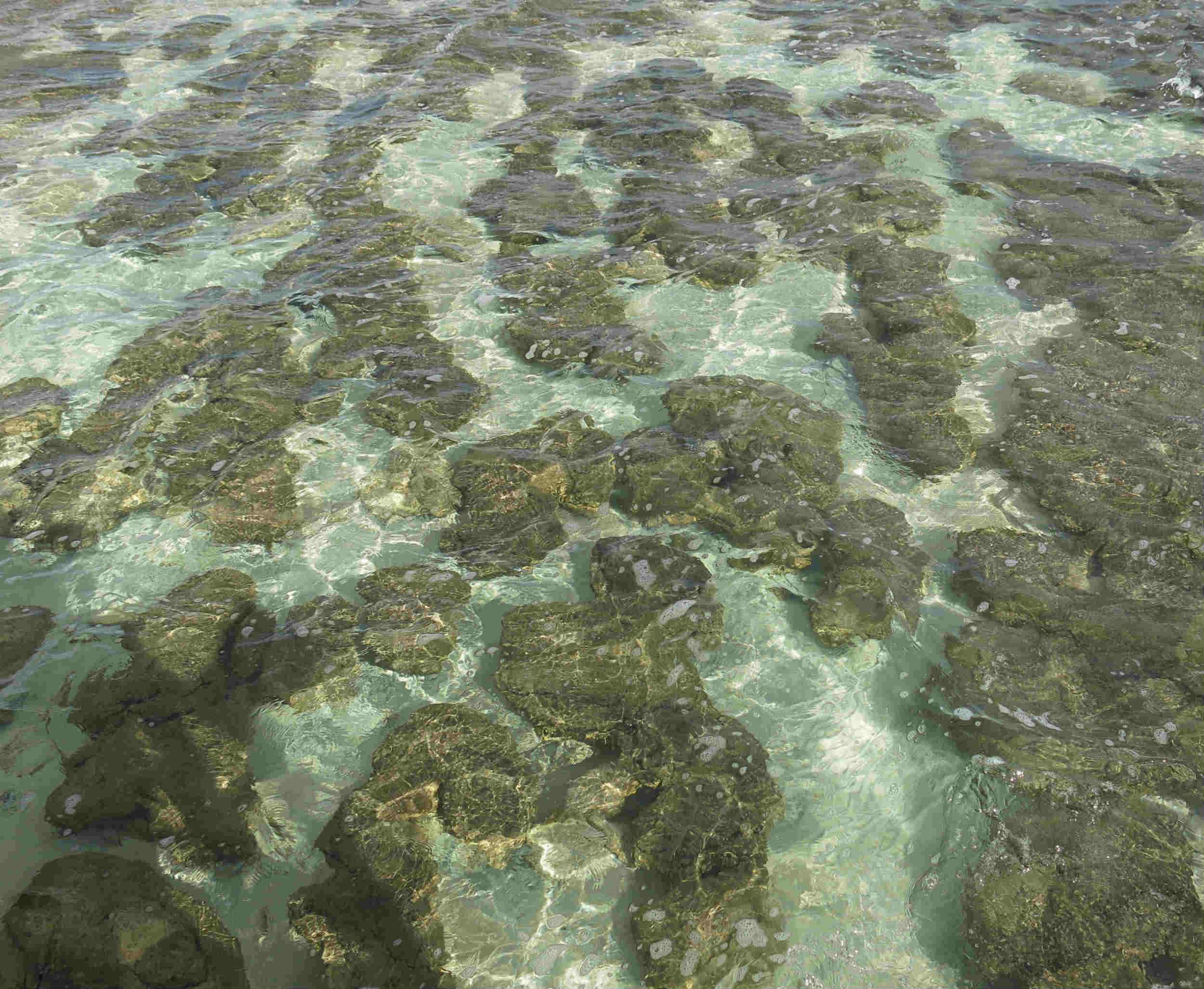Australien_Westen-Shark-Bay-Hamelin-Pools-Detail
