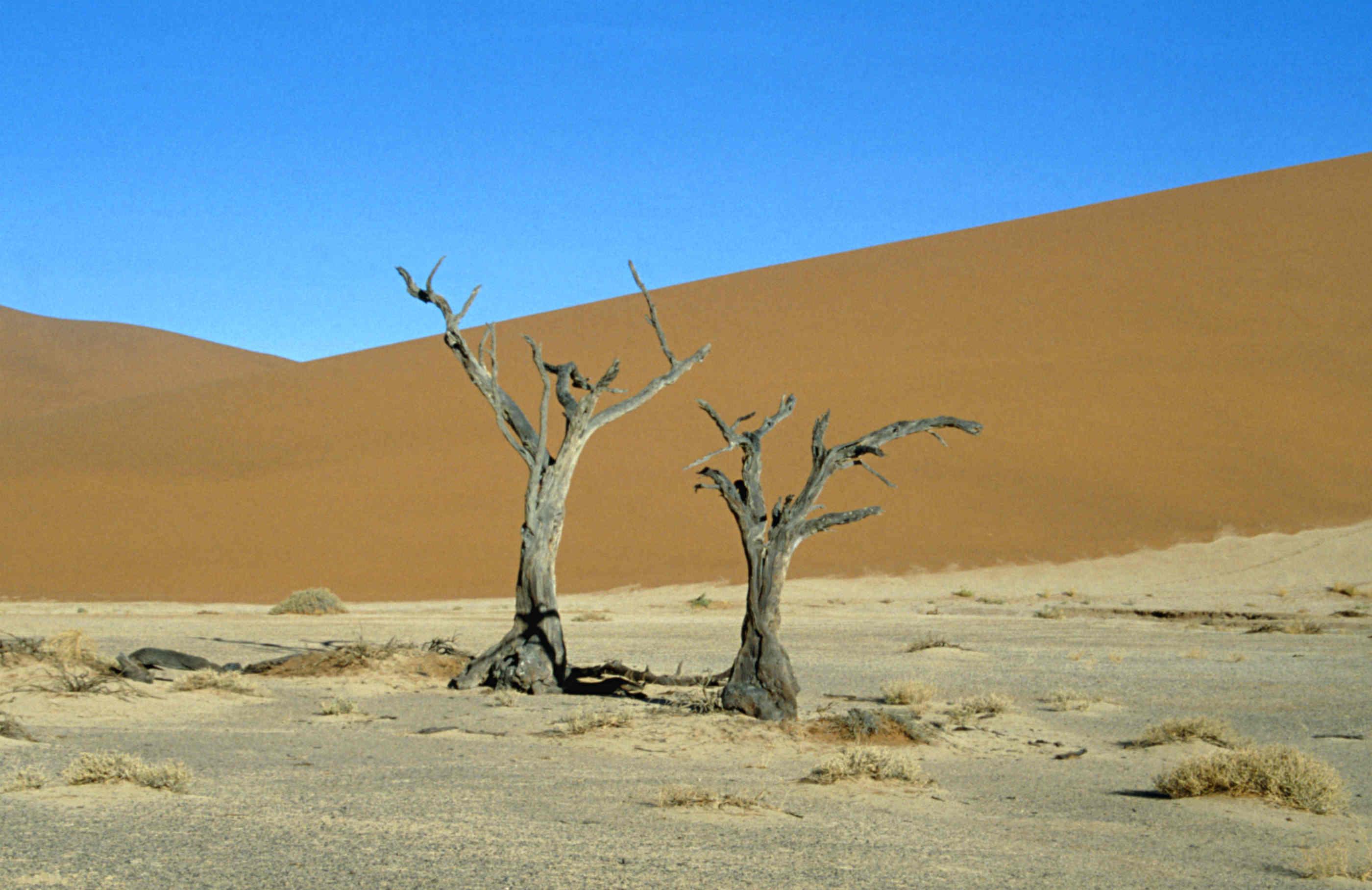 Südafrika_Namibia_Sambia_Sossousvlei