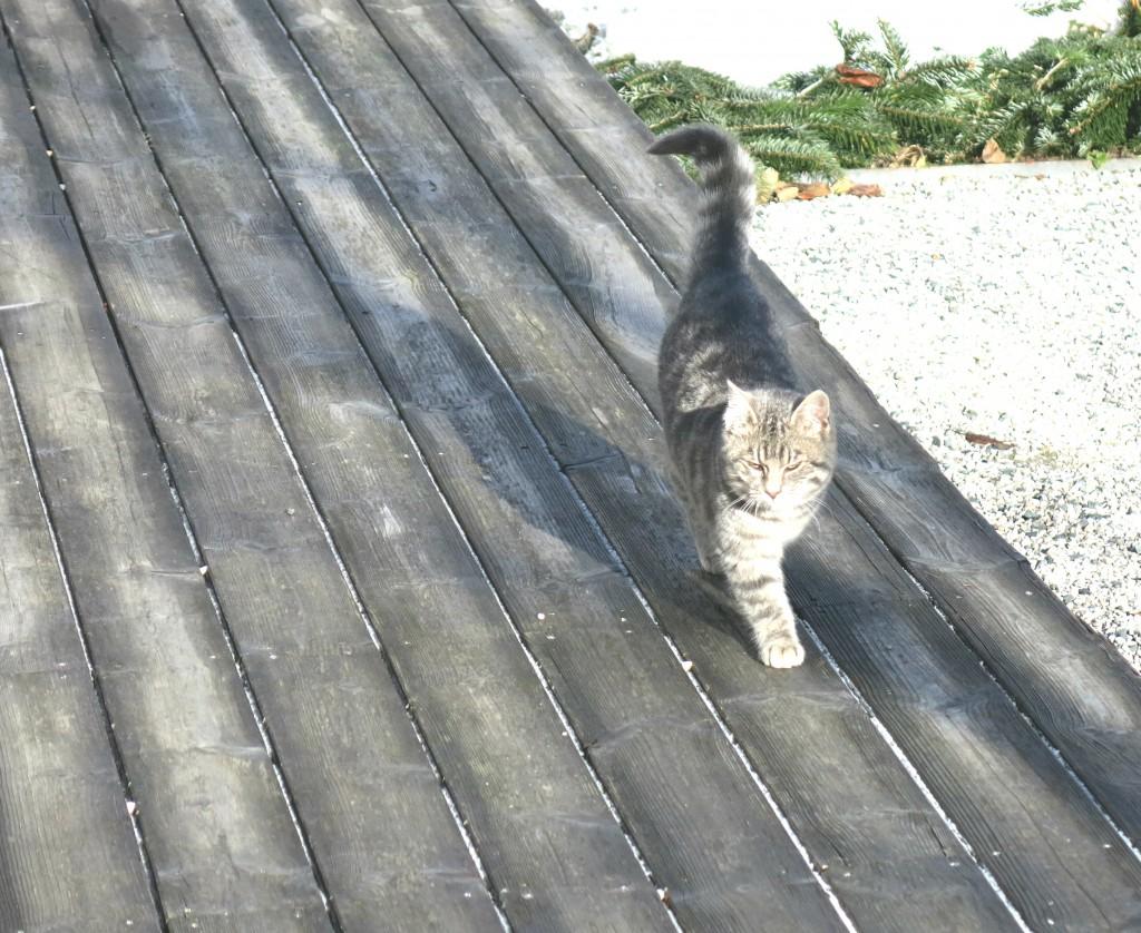 Wiesergut Hinterglemm-Katze