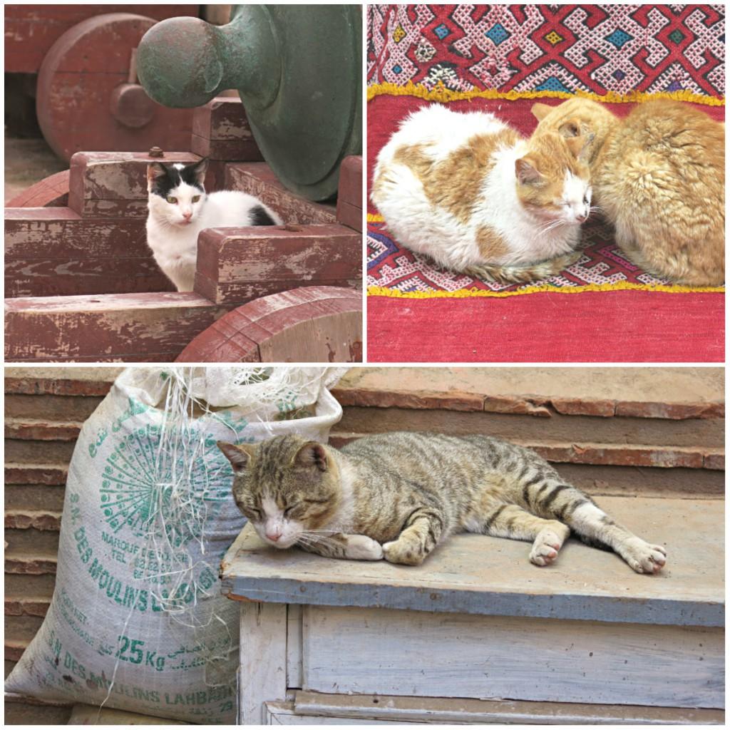 Marokko-Katzen