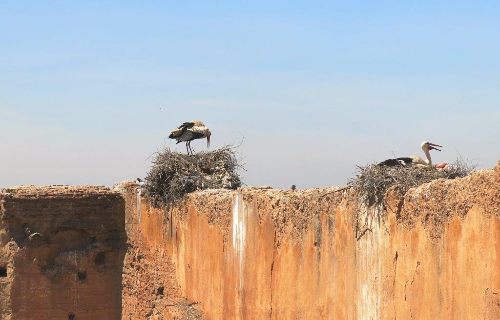 Roadtripp-Marokko-Marrakesch-Störche