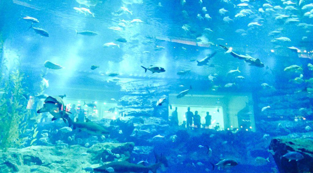 Dubai-MIt-Kind-Aquarium