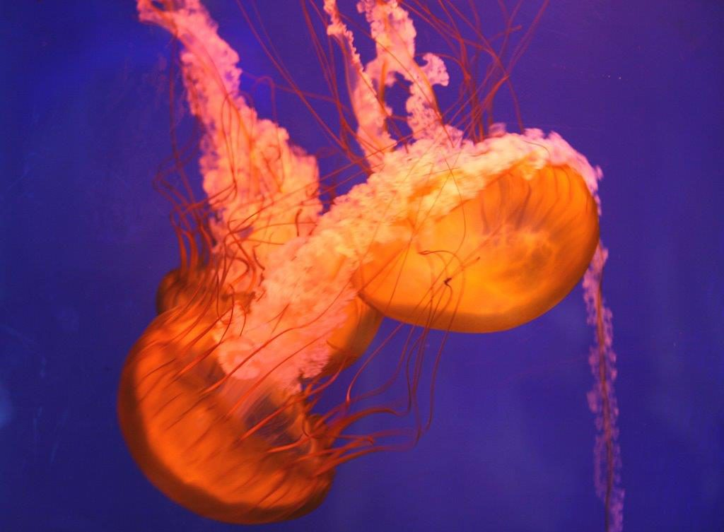 Dubai-Mit-Kind-Aquarium-Jellyfish