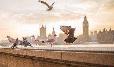 london-mit-rollstuhl-titelbild-copyright-pixabay