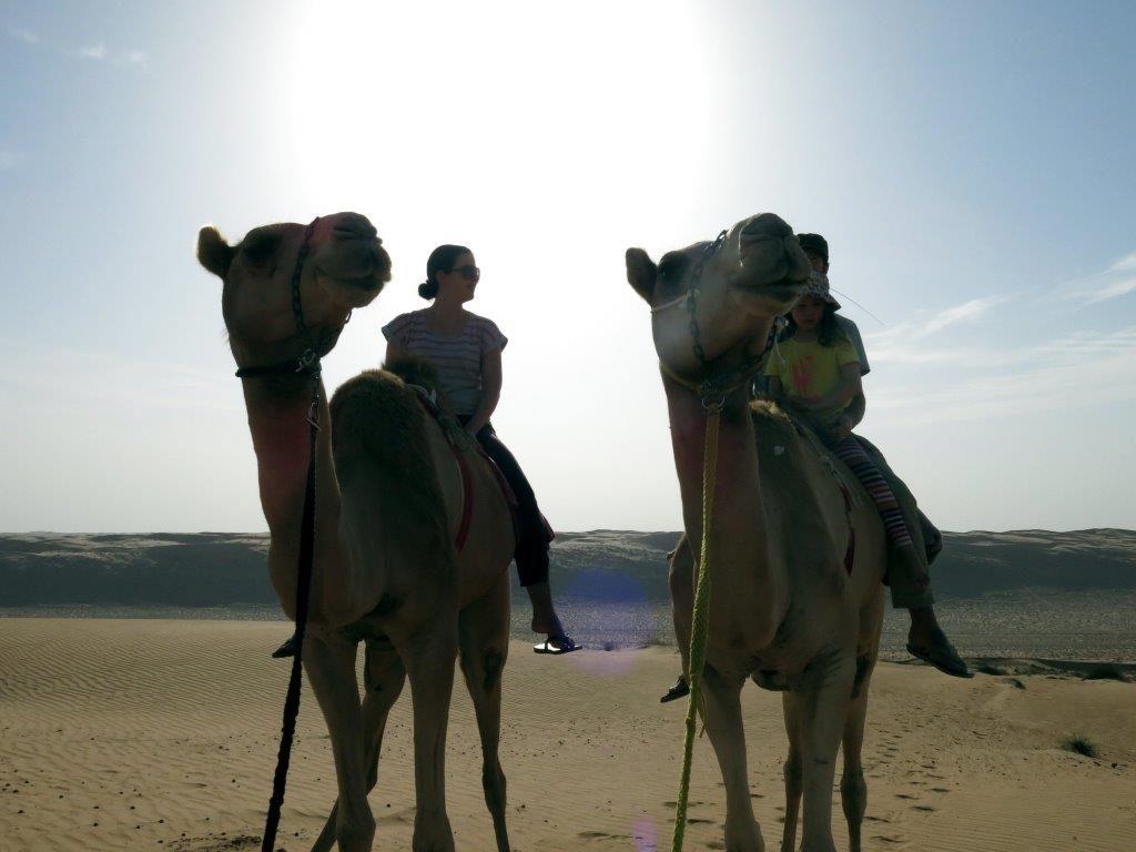 oman-im-allradwagen-kamelritt