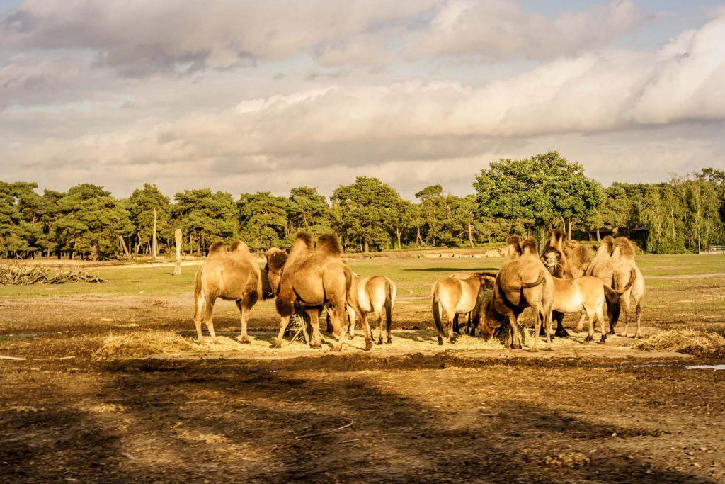 Safaripark Beekse Bergen Wiltiergehege
