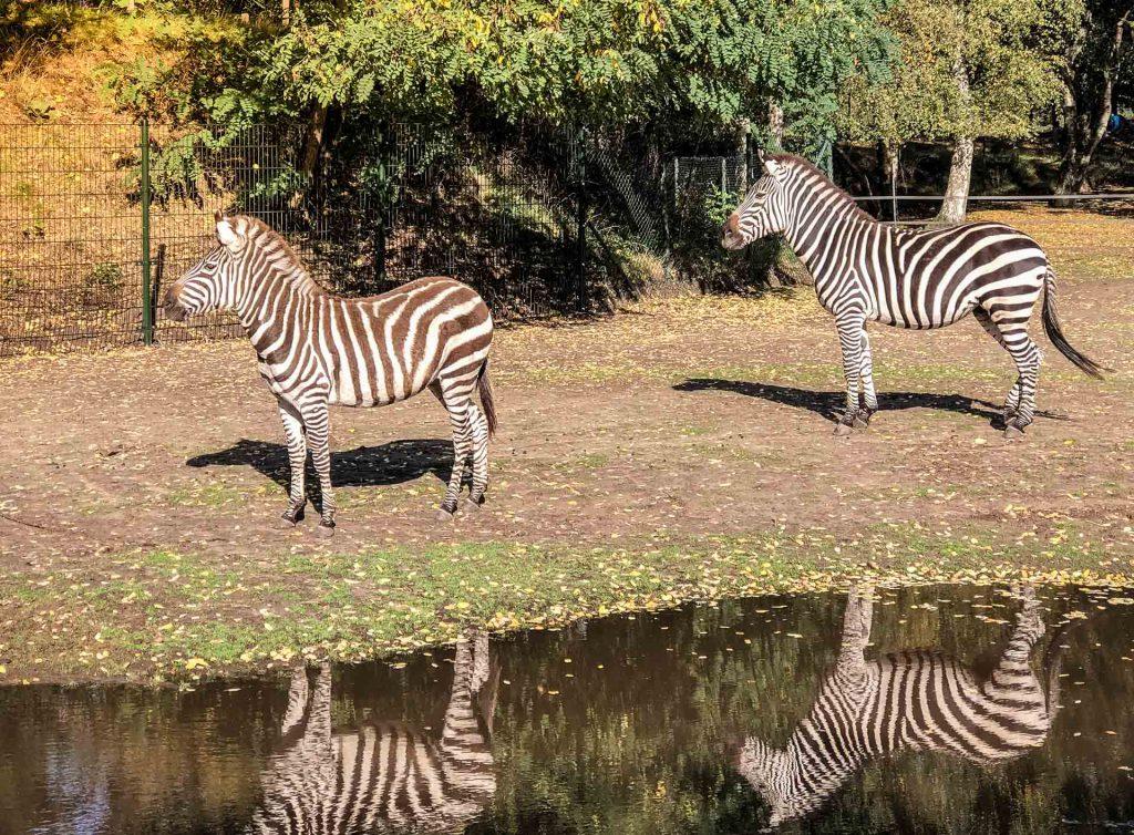 Safari in Beekse Bergen